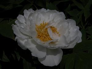 Gardenmemday_019