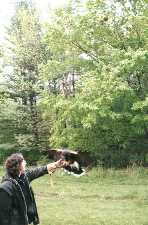 Hawk5