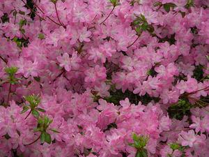 Spring2005_003_1