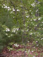 Spring2005_012